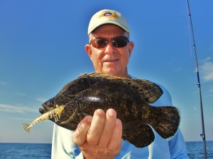 Beach tripletail caught on crab trap  markers